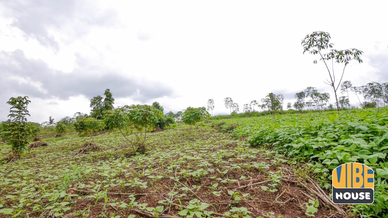 Fertile plot of land for sale in Rusororo, Kigali